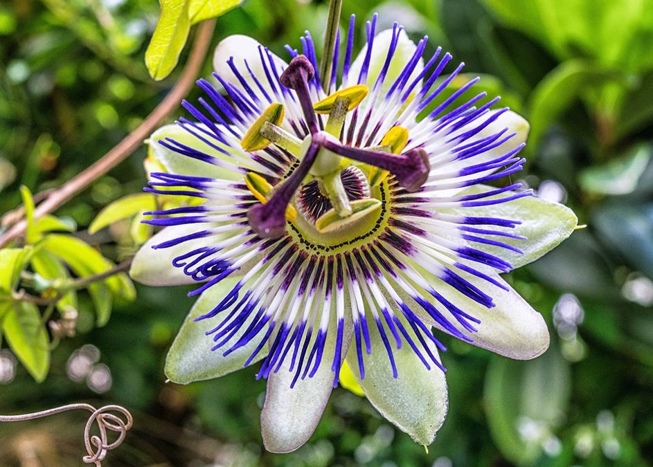 3 zioła, które pomogą Ci się uspokoić